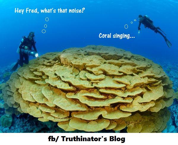 coralsinging
